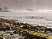 Algae rocks on the beach — Stock Photo