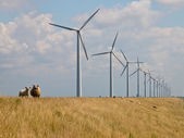 Sheep in front of windturbines — Stok fotoğraf