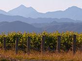 Vinyard mountain backdrop — Stock Photo
