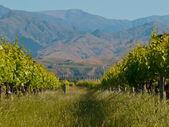 Winnica wzgórza — Zdjęcie stockowe