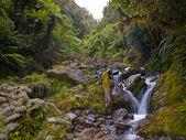 Rainforest river — Stock Photo