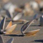 Empty seashell — Stock Photo
