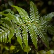 Fern leaf catching sunbeam — Stock Photo #14690453
