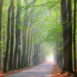 Stock Photo: Brightly lit forest lane