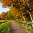 Stock Photo: Inviting bench in autumnal park