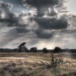 HDR image of a nature reserve — Stock Photo