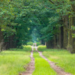 Stock Photo: Long straight forest lane dissapearing on horizon