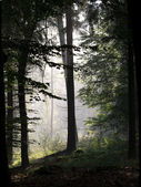 Forest silhouette — Stock Photo