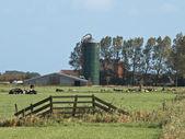 çiftlik, silo ve inek ile tarım manzara — Stok fotoğraf
