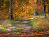 Bent forest lane in autumn colors — Stock Photo