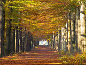 Large forest lane in autumn colors — Stock Photo