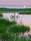 Colorful sunset over marshland — Stock Photo