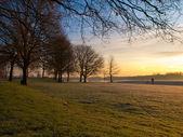 Zima v holandské rekreační oblasti — Stock fotografie