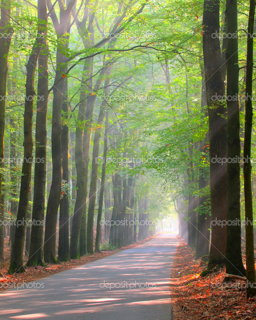 Forest lane is brightly lit by sun rays — Stock Photo #14702545