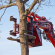 Stock Photo: Tree cutting crane about to cut tree
