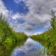 Freshwater ditch in dutch conservation area — Stock Photo #14717811