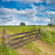 Stock Photo: Fenced road in summer landscape