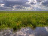 Dutch polder landscape — Stock Photo