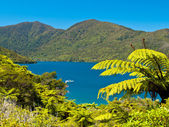 Tree ferns and blue water — Stock Photo