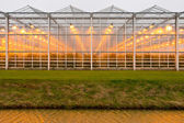 Background commercial greenhouse — Stock Photo