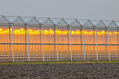 Exterior of a commercial greenhouse — Stock Photo