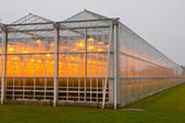 The exterior of a greenhouse — Stock Photo