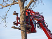 Tree cutting crane about to cut a tree — Stock Photo
