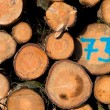 Freshly cut logs — Stock Photo