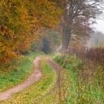 Bent forest lane — Stock Photo