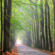 Brightly lit forest lane — Stock Photo
