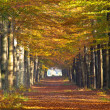 Stock Photo: Large forest lane