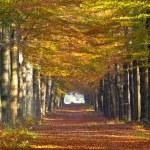 Large forest lane — Stock Photo