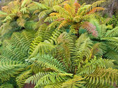 Group of tree ferns — Stock Photo