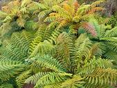 Grupa drzewo paproci — Zdjęcie stockowe