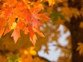 Autumnal foliage — Stock Photo