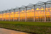 Commercial greenhouse — Stock Photo