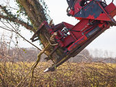 Tree cutting crane in action — Zdjęcie stockowe