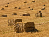 Straw bales background — Stock Photo