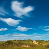 Summer landscape at the coast — Stock Photo