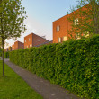 Urban street with pavement and hedgerow - Stock Photo