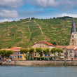 Stock Photo: Vineyards in Cote du Rhone France
