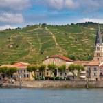 Vineyards in the Cote du Rhone France — Stock Photo #21160967