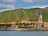Vineyards in the Cote du Rhone France — Stock Photo