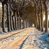 Lindo dia de inverno — Fotografia Stock