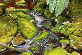 Mountain stream — Stockfoto