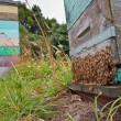 Stock Photo: Group of Bees at Entrance of Beehive
