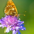 Butterfly Warming its Wings in the Sun — Stock Photo