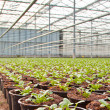 Nursery Hothouse — Stock Photo