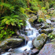 Waterfall in lush rain forest — Stock Photo