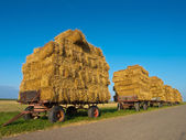 Row of Trailers with Hay — Stock Photo